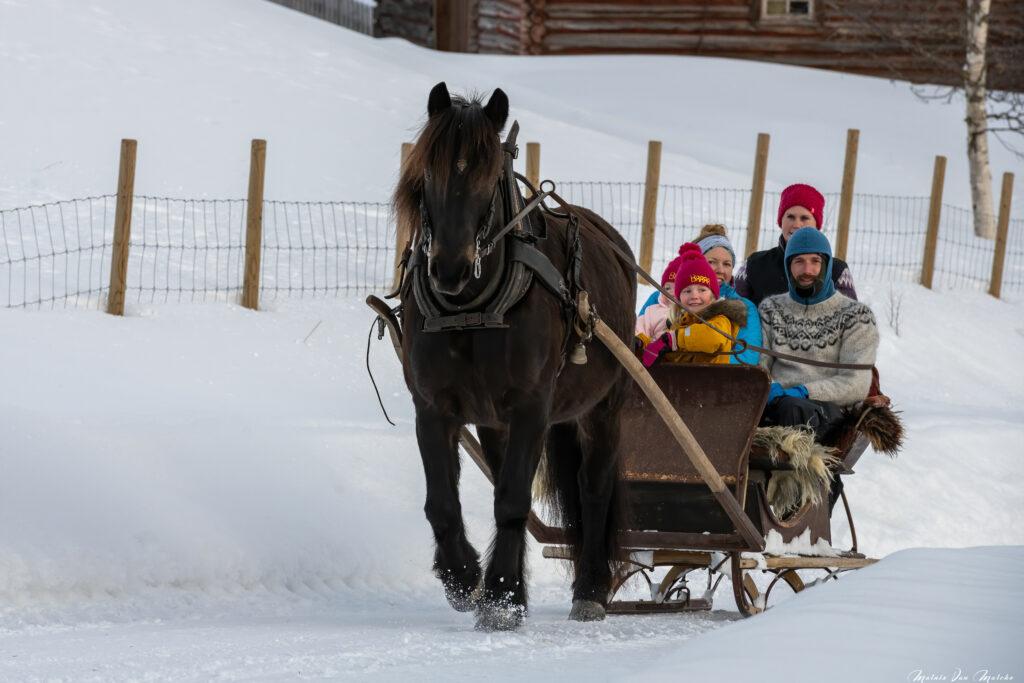 Rondane River Lodge horsesleigh ride